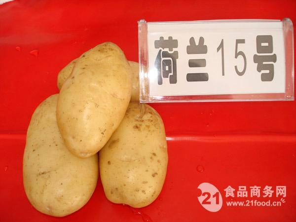 脱毒土豆种子