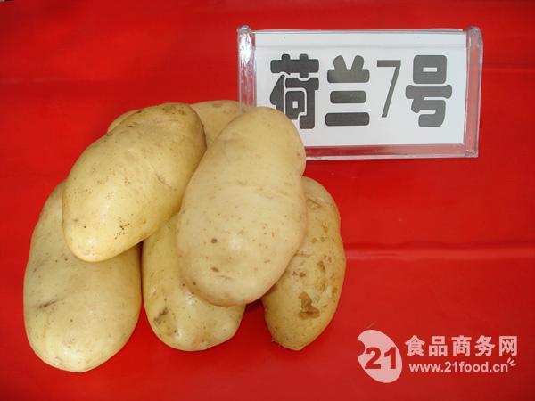 马铃薯种子荷兰7号