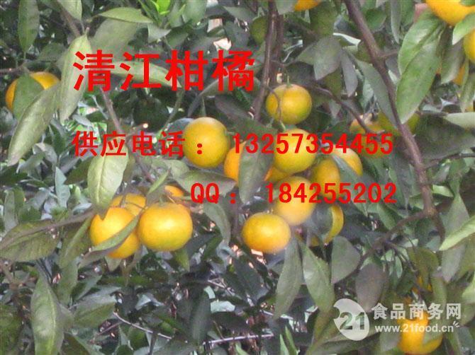 东江湖蜜桔全国包邮一件代发13257354455