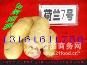 土豆种子厂家