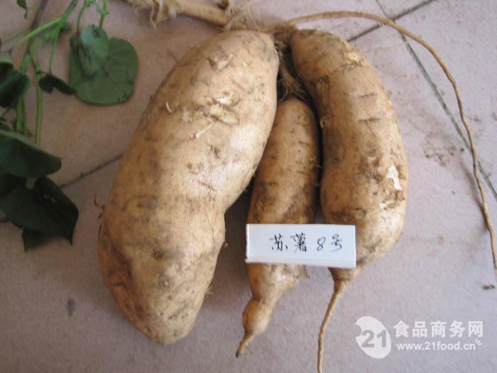 黄皮苏薯8号红薯