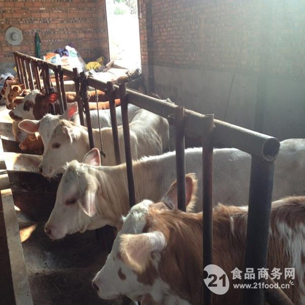 山西省肉牛养殖_养牛场_山西省忻州市__牛-食品商务网