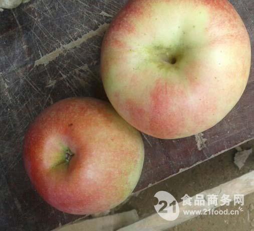 苹果批发福建