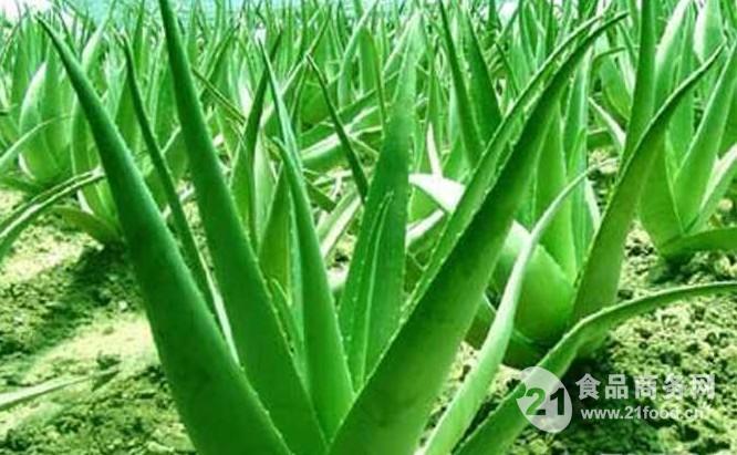 芦荟提取物植物粉供应商、芦荟粉商、价跑道形磁性材料图片