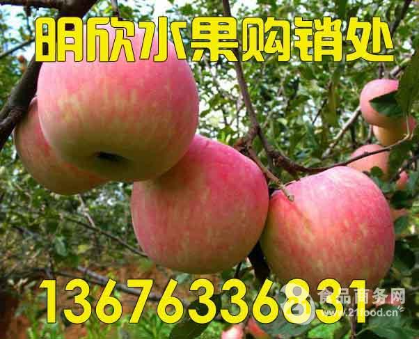 冷库红富士苹果