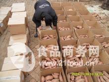 山东红薯批发价格