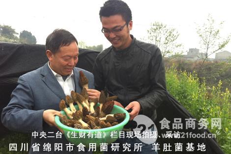 羊肚菌商业化栽培基地