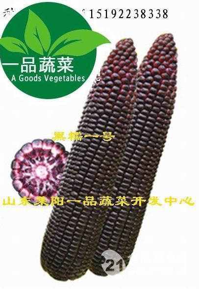 杂交一代黑玉米种子