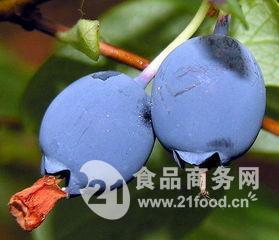 越橘浓缩粉(花青素25%,花色甙25%)