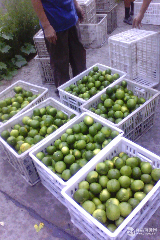 宜昌早熟蜜桔销售