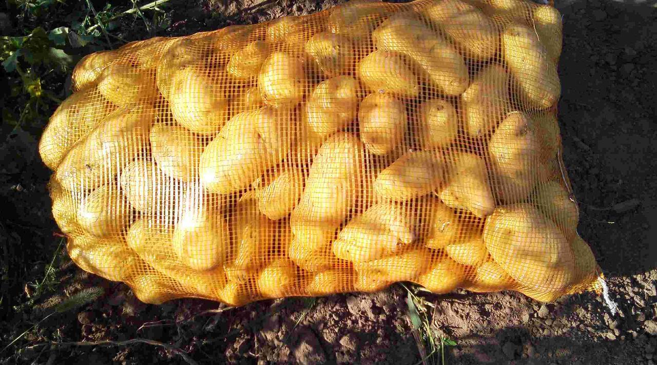 土豆手工动物图片大全