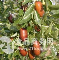 长红枣产地代办