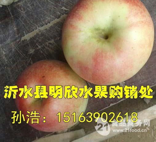 嘎啦苹果价格