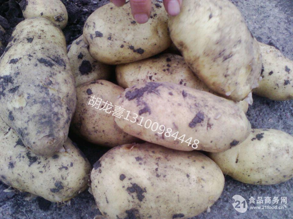 黑龙江土豆种子菜豆批发价格行情