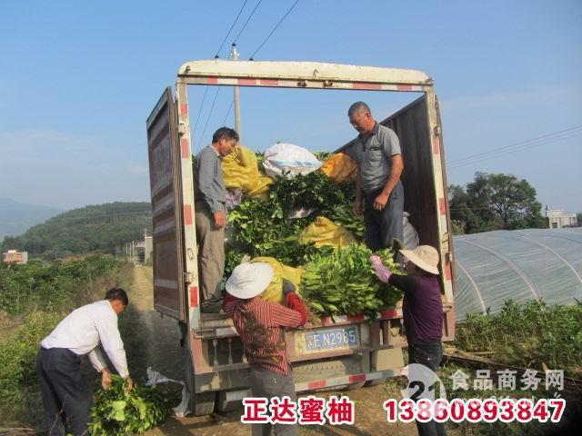 2016-2017年三红蜜柚苗最新价格
