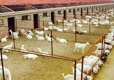 养肉牛200头一年能挣多少钱