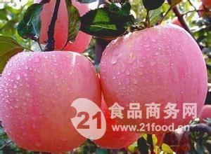陕西红富士苹果基地 膜袋红富士苹果价格