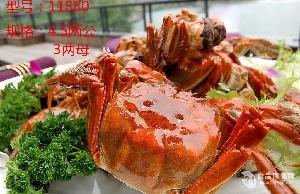九沐森阳澄湖大闸蟹  型号11880