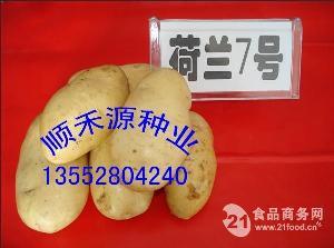 土豆种子价格