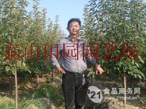 优质桃树苗