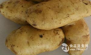 土豆种子夏坡蒂