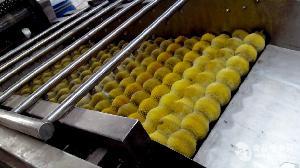和田大红枣清洗机设备