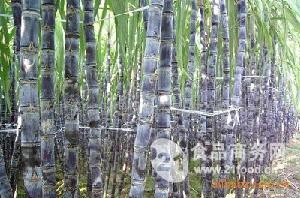 桂林黑甘蔗