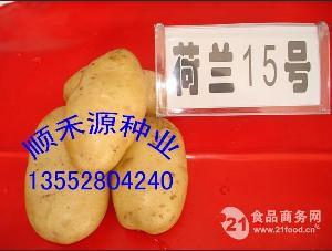 蔬菜型土豆种子