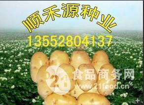 顺禾源土豆种子
