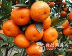 柑橘保鲜库