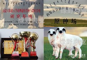 2014年乌珠穆沁羔羊肉订单