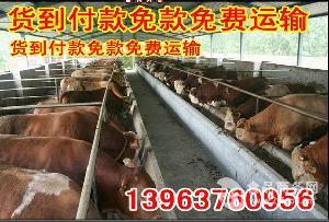 全国肉牛价格