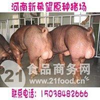 种猪的品种