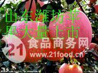 山东潍坊红将军苹果基地