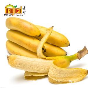 新鲜香蕉 国产优质香蕉