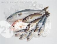 冻鱼进口报关 冻鱼进口清关公司