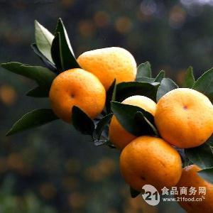 廣西南豐蜜桔