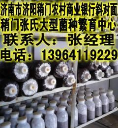 山东平菇菌种