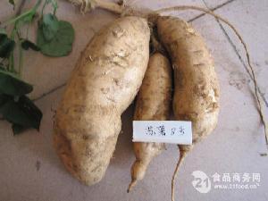 黃皮蘇薯8號紅薯