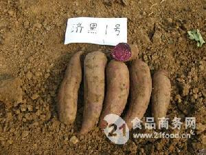 济黑1号红薯