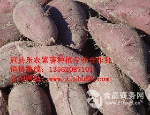 紫红薯纯种