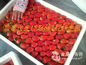 郯城草莓基地,代收草莓