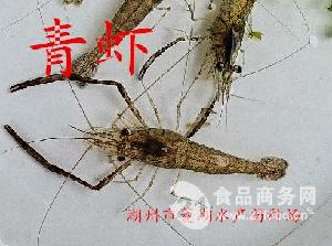 优质河虾青虾苗供应