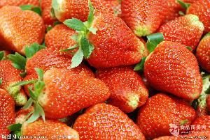 量大从优价格优惠新鲜草莓供应商