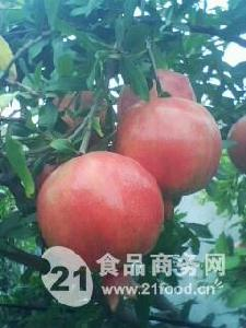 高地红石榴_热带太阳果