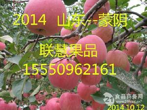 山东冷库苹果