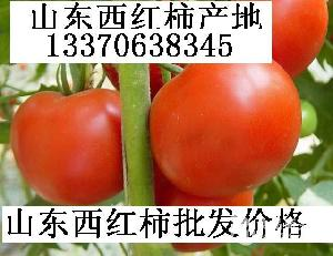 粉红西红柿