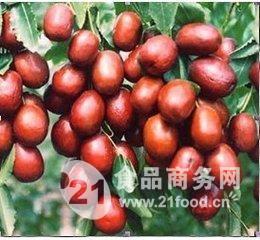 供应天华地润红枣,五*和田玉枣