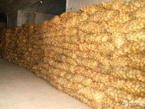 土豆种子袋装70斤