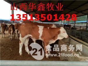 鲁西黄牛肉牛犊华鑫牧业厂家直销